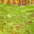 庭に落ちた落ち葉